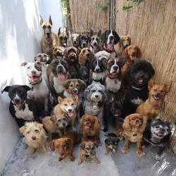 allemaalhonden