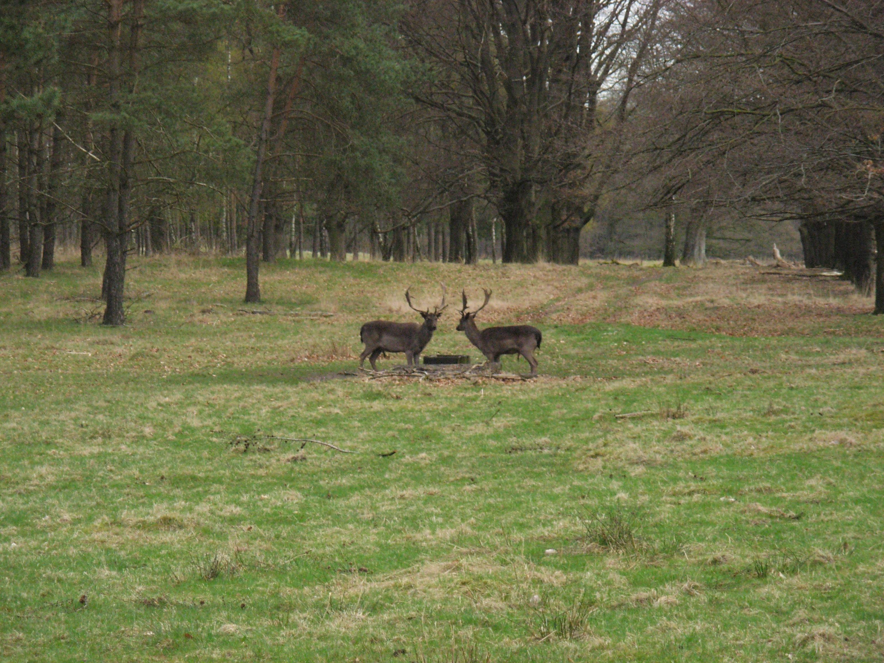 Wildpark t Aardhuis