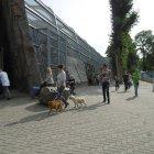 honden-ouwehand