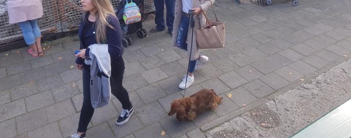 hondj tivoli