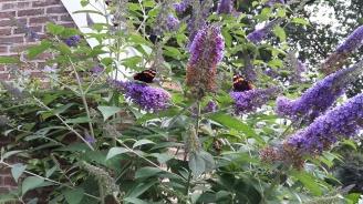 orvelte vlinders
