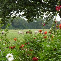 paarden in drenthe