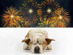 hond bang voor vuurwerk