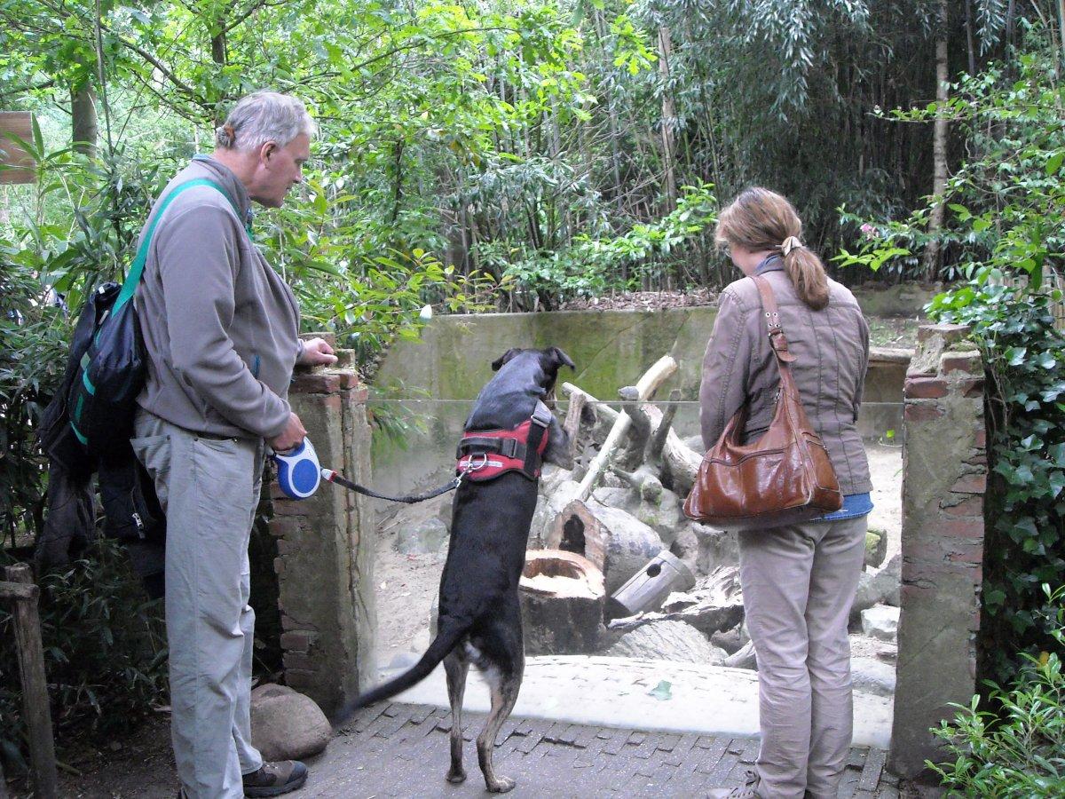 Dierenpark Amersfoort en Dinobos in Amersfoort