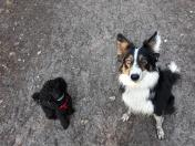 2 doggies