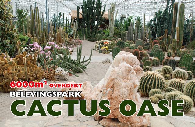 foto cactusoase