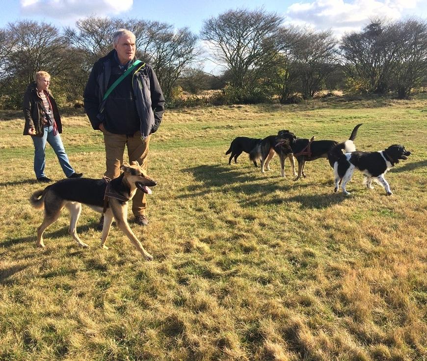 honden in t harde bij Blaricum Noord Holland