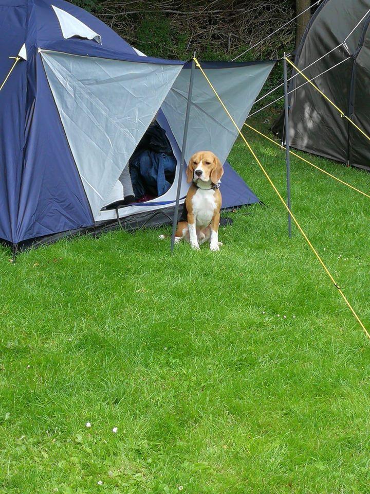 met de hond op vakantie kamperenmet de hond op vakantie kamperen
