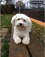 Hondje Fay ligt op bankje