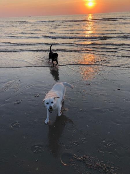 2 honden zonsondergang