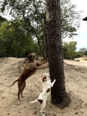 dagjeweghondmee