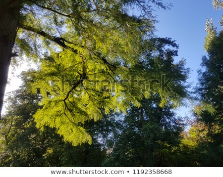 sunrays-on-leaves-fairytale-light-450w-1192358668