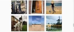 kikis hondenhotel instagram