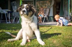 hond mee kamperen De Krim