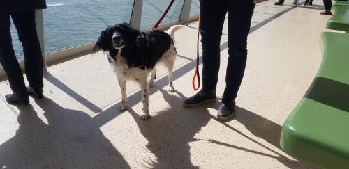 honden op de boot naar texel