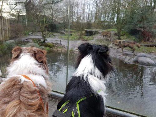 dierenpark nordhorn duitsland