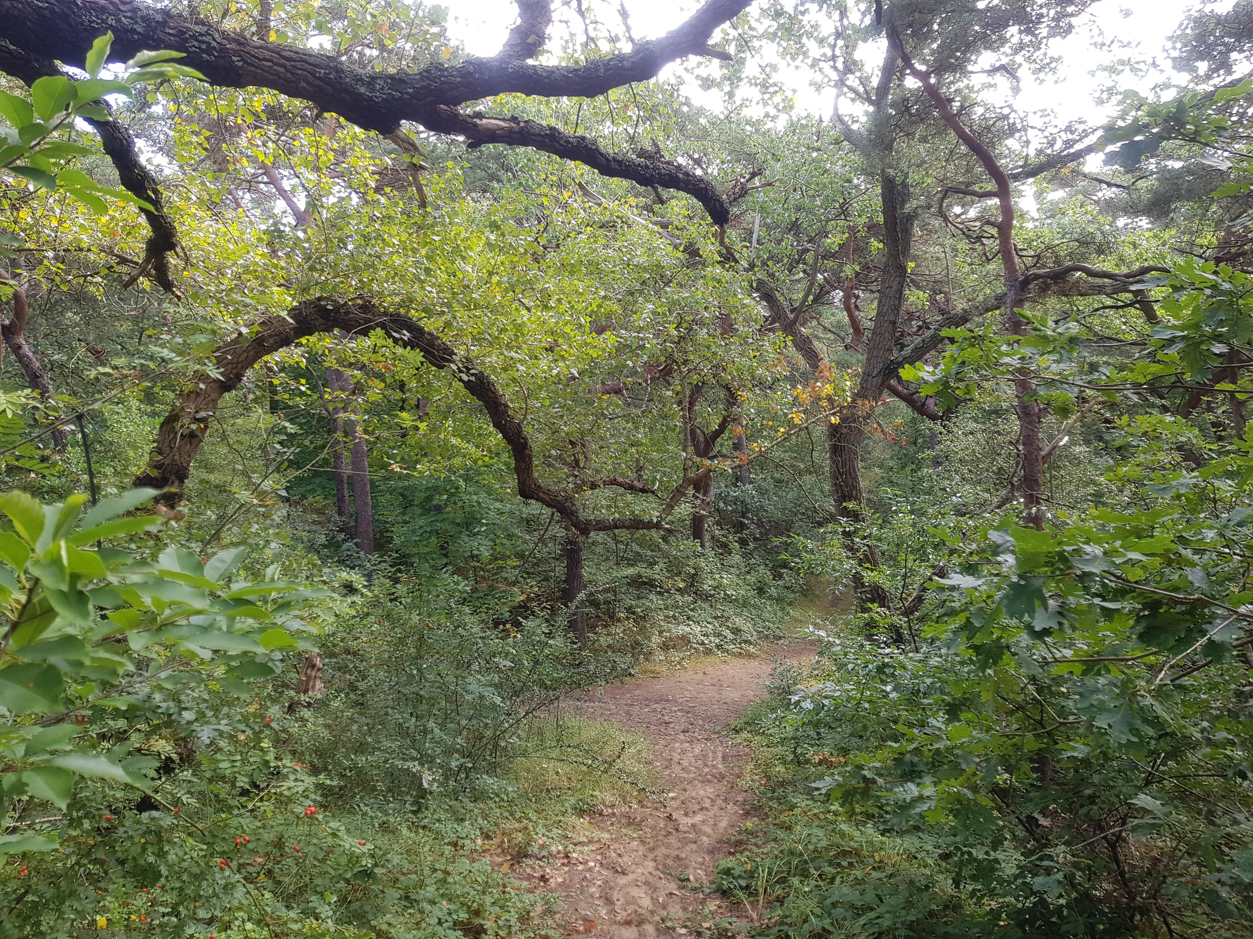 duinrell bos