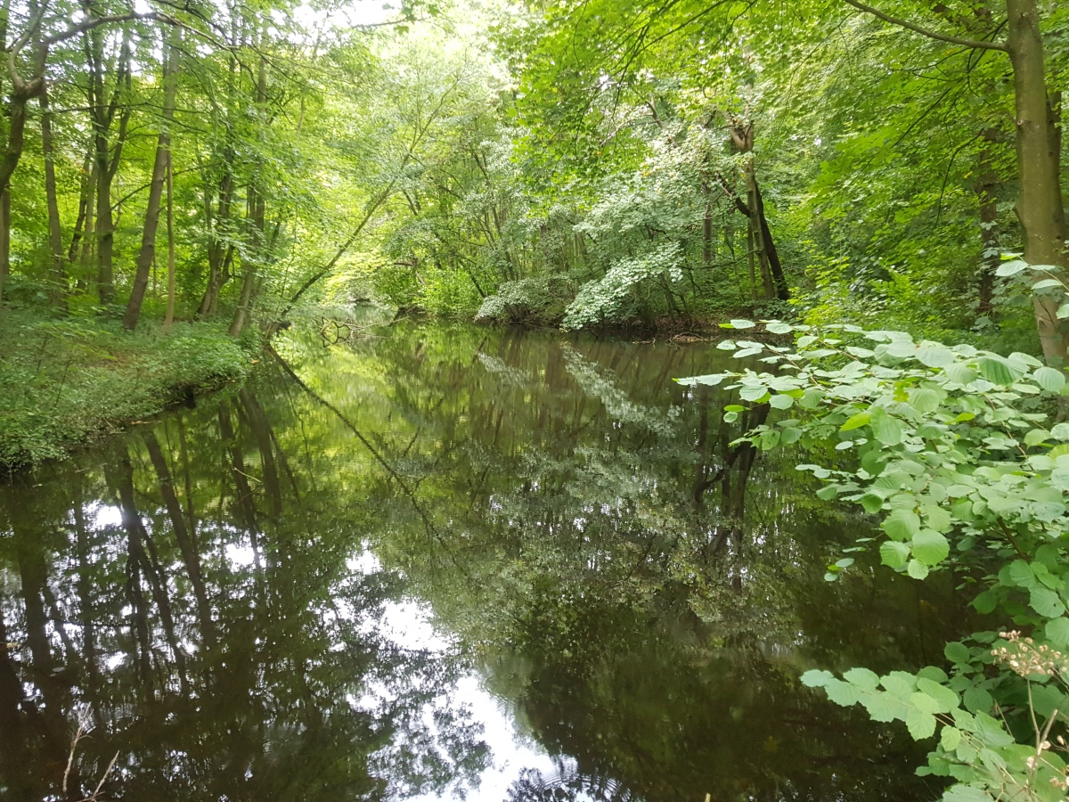 Amsterdamse bos viervoetervriendelijk
