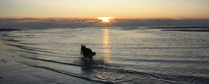 hond aan zee dagje weg hond mee