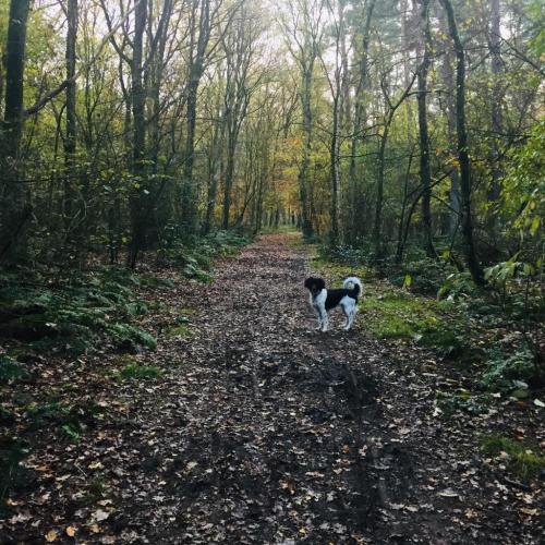 Melle in het bos