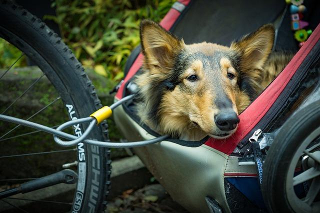 hondenwiki foto hond in fietskar